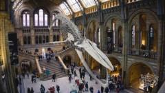 Лондонский музей намерен проверить Чарльза Дарвина на расизм