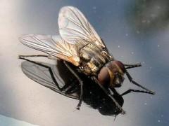 Во Франции 80-летний дедушка пытался убить муху и взорвал дом