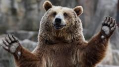 Медведь-диверсант «захватил» вышку на военной базе в Турции (видео)