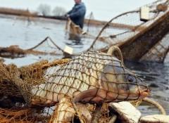 Заплатили штраф: в Ейске вступил в силу приговор суда в отношении браконьеров