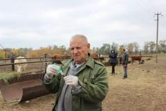 Ветврачи Ростовской области начали массовые обследования скота на бруцеллез и туберкулез