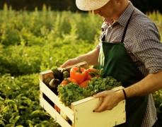 Кубанским фермерам предоставят федеральную торговую онлайн-площадку