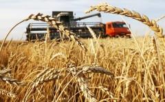 Экспорт кубанской сельхозпродукции составит 2,7 млрд долларов