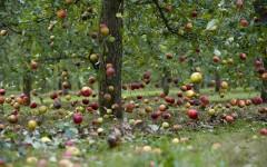 В Москве незнакомец заманил женщину на прогулку в яблоневом саду и изнасиловал