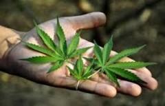 В Майкопе 36-летний мужчина ждет суда за хранение крупной партии наркотиков