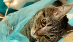 Ростовские ветврачи стерилизовали по льготе 500 собак и кошек