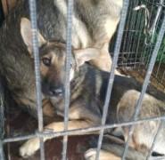 В Невинномысске продолжают заботиться о бездомных животных