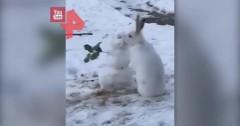 В Канаде кролик «целовался» со снеговиком