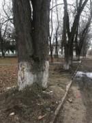В Невинномысске кронируют деревья в сквере на улице Маяковского
