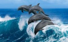 Светлана Бессараб: Незаконно выловленные дельфины должны вернуться в море