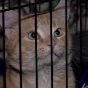 В Австралии экс-военный захватил приют для животных из-за своей кошки