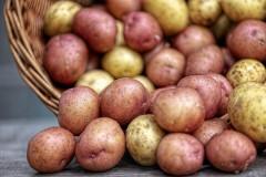 Фермеры предложили пустить в продажу картофель «эконом-класса»
