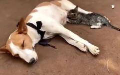 В Нигерии собака накормила грудным молоком котенка
