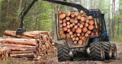 На Ставрополье деревообрабатывающая промышленность получит поддержку
