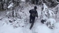 «Собакочеловек»: новая оптическая иллюзия стала вирусной в Сети