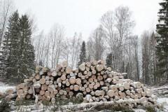 В Сибири пресекли крупный канал контрабанды леса