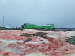 У антарктической станции Украины лежит розовый и зеленый снег