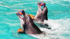 Депутат Госдумы предложила закрыть дельфинарии в России