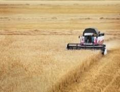 Ростсельмаш поставил в Египет партию зерноуборочных комбайнов ACROS 585