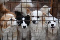 Сочи и Туапсе создадут межмуниципальный приют для бездомных животных