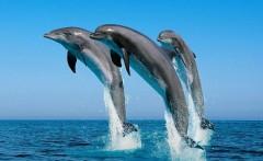Краснодарский бизнесмен пытался незаконно доставить дельфинов в Марокко