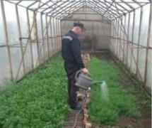 В ставропольской ИК-4 осужденные выращивают свежую зелень