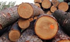 Краснодарские таможенники пресекли контрабандный канал экспорта ценных пород древесины в Таджикистан