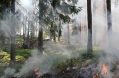 Под Магнитогорском вспыхнул лесной пожар