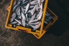 В Краснодарском крае сохраняются ограничения на рыбную ловлю