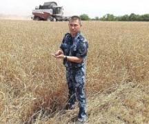 На Ставрополье в ИК-6 завершили сбор зерновых культур