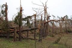 Три человека погибли из-за урагана в Тверской области
