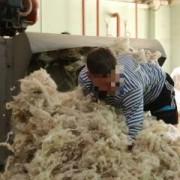 Осужденные, отбывающие наказание в ИЦ-1 Георгиевска, работают на предприятии по переработке шерсти