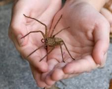 Укушенному пауком на Ибице 19-летнему британцу ампутируют пальцы