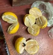 Лимоны «с начинкой» пытались передать в колонию Новочеркасска