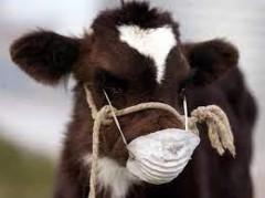 Ветврачи Дона вакцинировали против ящура более 750 тысяч животных
