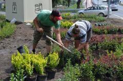 На отреставрированном невинномысском путепроводе высаживают зеленые кусты