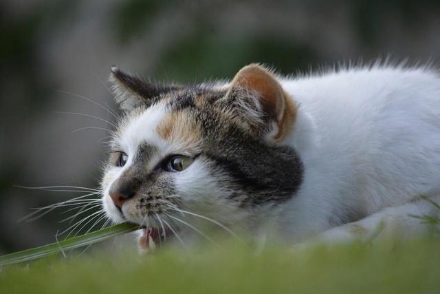 Еще один кот взбесился вРостовской области