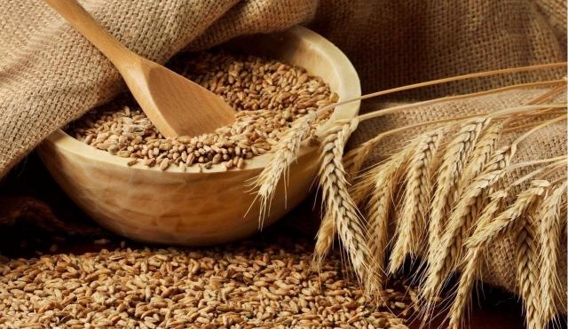 Ждём  получить урожай зерна неменее  100 млн.  тонн— Министр сельского хозяйства