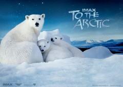 Фильм «Арктика 3D» – настоящее путешествие на край Земли