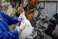 На Дону ветврачи проводят вакцинацию против птичьего гриппа