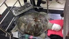 В Таиланде из черепахи при операции извлекли 900 монет