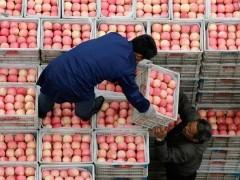 На Кубани стабильный рост ожидается в розничной и оптовой торговле, общественном питании и сфере бытовых услуг.