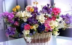 Краснодарец грабил прохожих, чтобы содержать свой цветочный бизнес