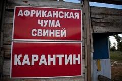 Трупы найденных под Новочеркасском свиней проверили на АЧС