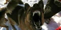 Красноярские следователи начали проверку после нападения собак на ребенка