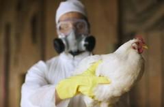В Октябрьском и Красносулинском районах Дона снят карантин по птичьему гриппу