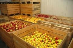В Белореченском районе фермеры построят фруктохранилище мощностью 2 тысячи тонн