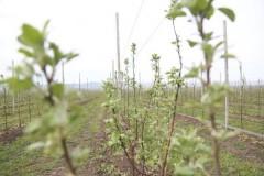 На Кубани на закладку садов потратят 371 млн рублей