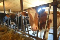 Мурат Кумпилов посетил семейную ферму в Кошехабльском районе Адыгеи