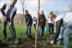 На Дону высадили 120 тысяч деревьев и кустарников